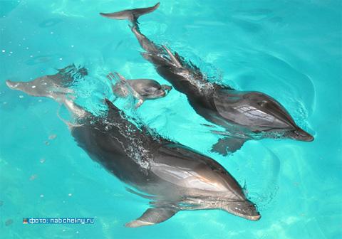 В городе появился новый житель – дельфин!