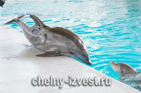 Горожанам предложили выбрать имя для дельфиненка, который родился в Челнах