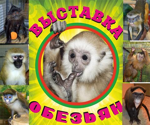 Выставка обезьян в Набережных Челнах!