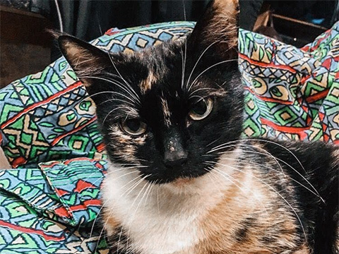 Передержка «кошек с характером»